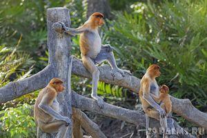 8 Лучших зоопарков мира: захватывающее путешествие в царство животных