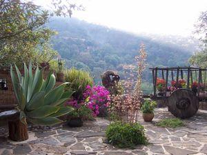 Агава де хуарес или день на плантации мексика