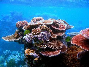 Coral elite service: как привлечь и удержать vip-клиента
