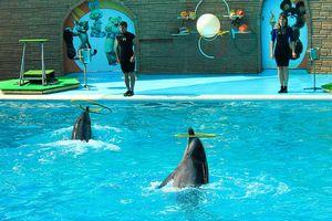 Дельфинарии крыма, цены, как добраться, программа