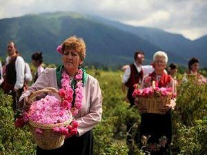 Долина роз готовится к празднику