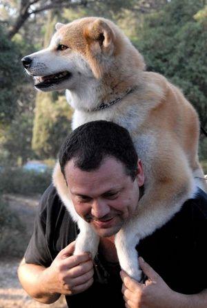 Где и как встретить собаку