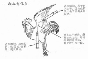 Инъекции куриной крови и другие чудачества в китайской медицине (эксклюзив дкд)