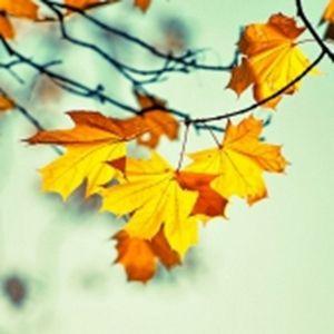 Как отдыхаем: ноябрьские праздники!