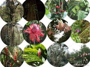 Коста-рика - рай для экотуризма