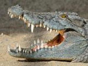 Крокодил уронил самолет