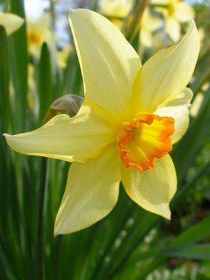 Нарцисс как символ самовлюбленности