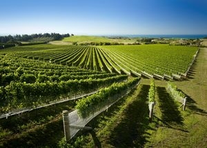 Новозеландские виноделы расширяют сотрудничество с россией