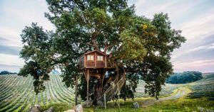 Оторваться от земли - отели на деревьях