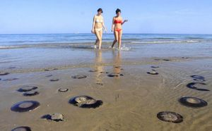 Побережье таррагоны атаковали медузы