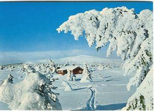 В эти выходные норвегия открывает горнолыжный сезон!