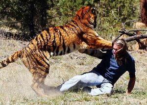 В парке terra natura тигр загрыз сотрудницу
